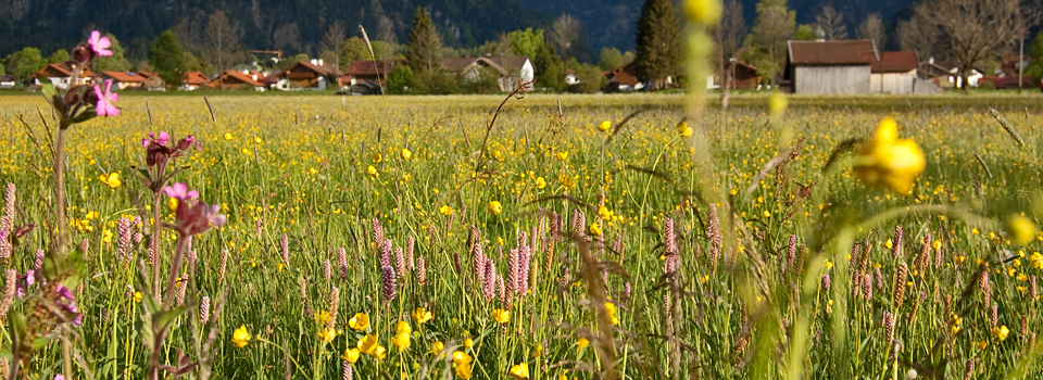 Blumenwiese2