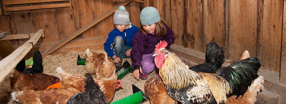 Kinder-mit-Hühnern-für-Slider