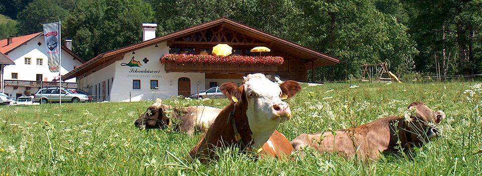 Schaukäs+Kuh